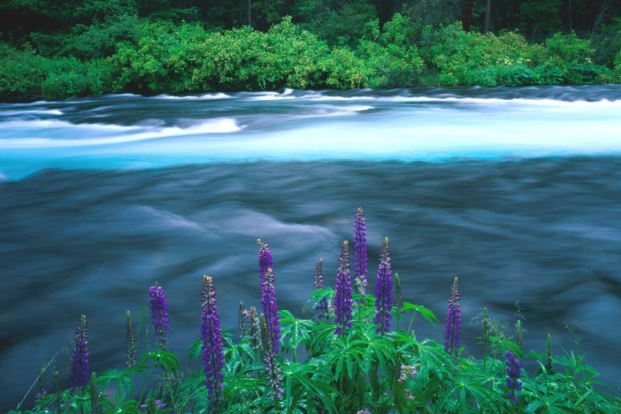 Metolius River, OR  Photo: Bruce Jackson