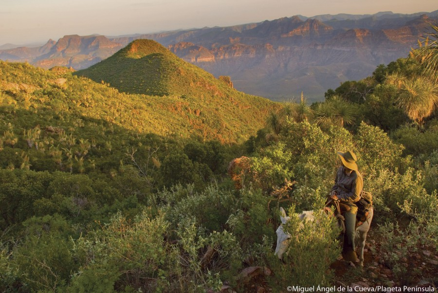 The heights of sierra guadalupe reveal relic vegetation from the pleistocene.