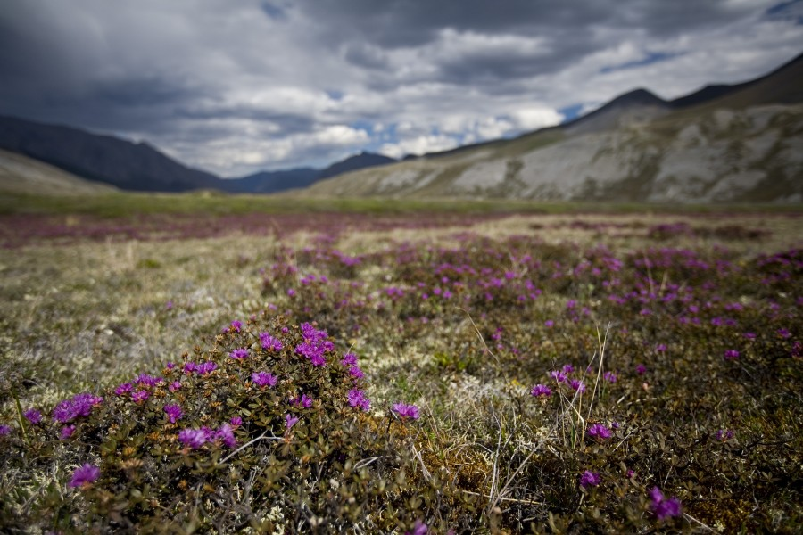 Arctic Refuge, AK  Photo: Lincoln Else