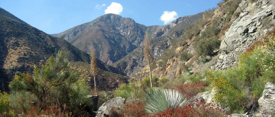 San Gabriel National Monument, CA  Photo: Laurel Williams