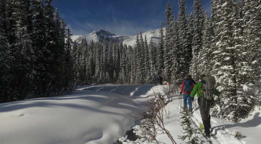 Y2Y Photo Credit Marla Zapach_Skitouring in Bighorn Wildland_Y2Y