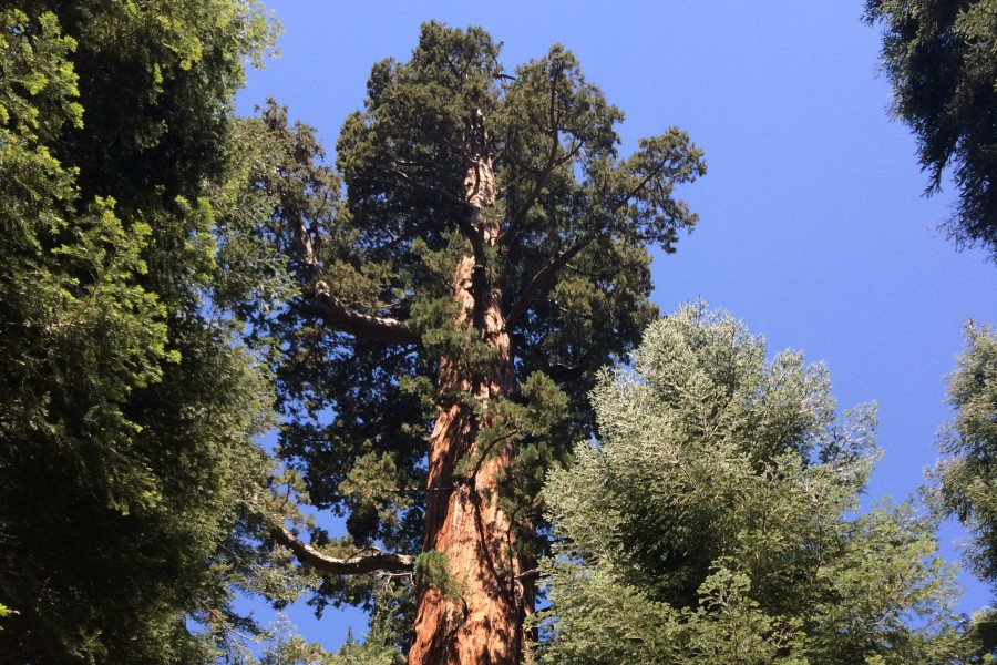 Save the Redwoods Image